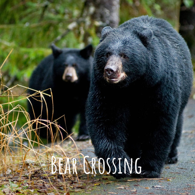 Bear Crossing:  A Community Conversation